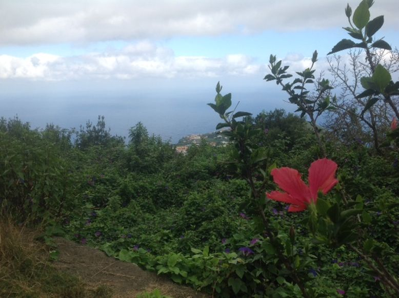 La Palma - Die grüne Insel