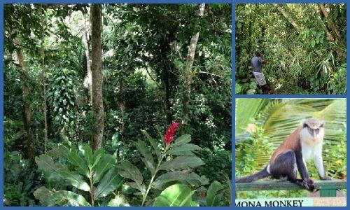 Regenwald satt, aber keine Mona Monkeys zu sehen
