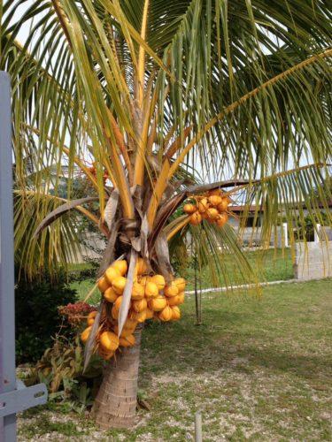 Endemische Palme